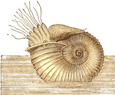 Nautilus from figuier